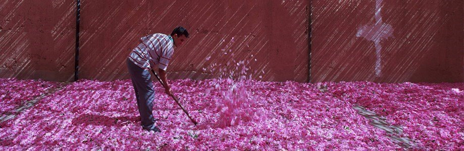 ren moroccan rose